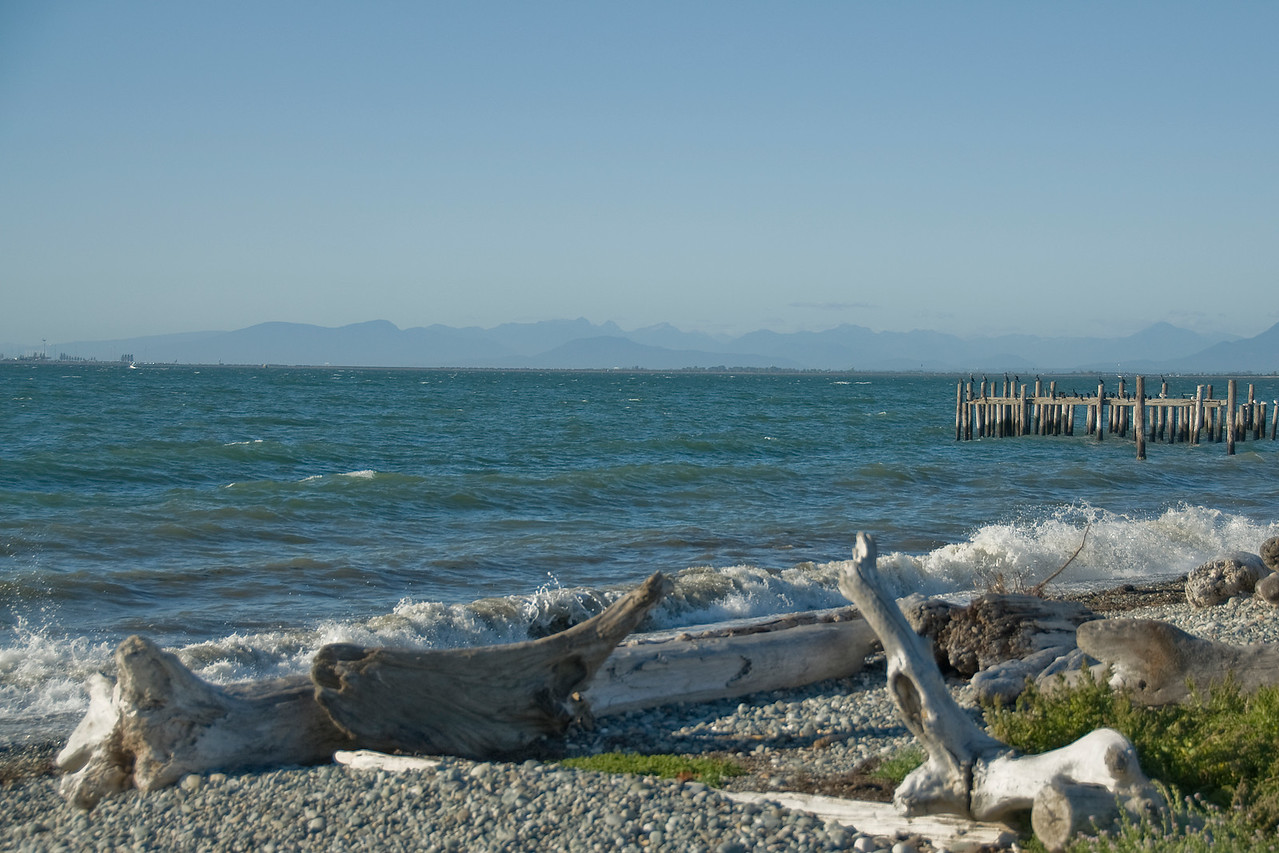 Drift wood on a rocky beach in Point Roberts, Washington