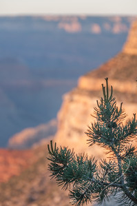 South Rim, Grand Canyon, Arizona - branch