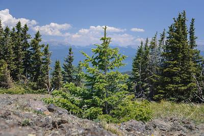 Wolf Creek Pass - evergreen