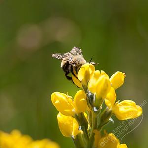 Lower La Jara Creek - bee