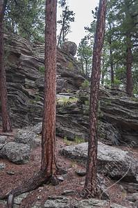 Mount Rushmore National Memorial - pines