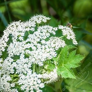 Roughlock Falls Trail - flower