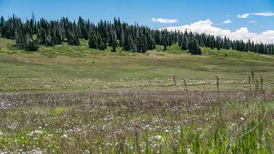 Southern Utah - sheep