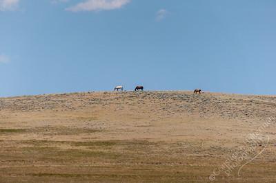 Gillette - horses