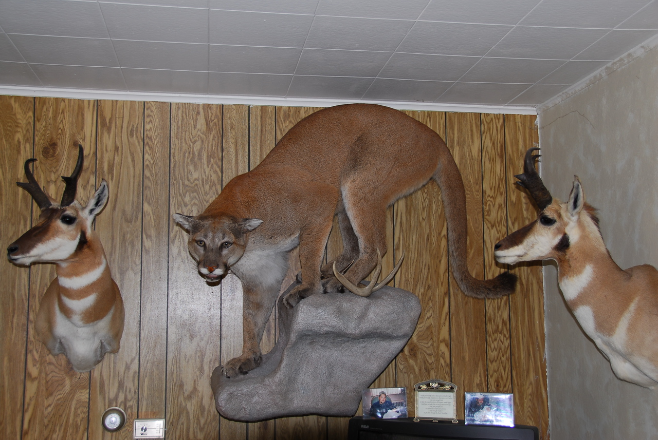 Panther and deer ornaments inside the house - Antigo, Wisconsin