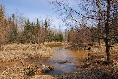 Muddy swamp in Antigo, Wisconsin