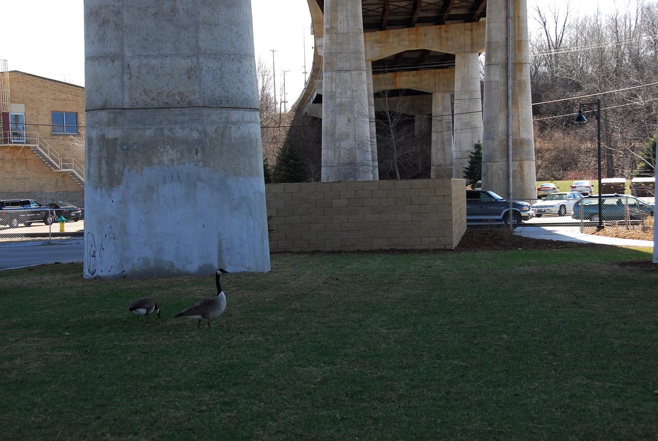 Geese under the bridge posts in Appleton, Wisconsin
