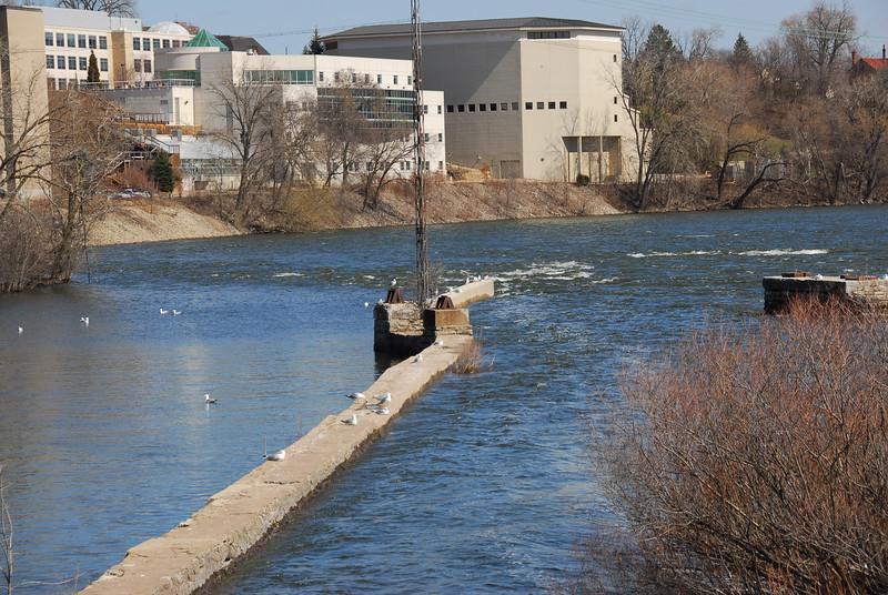 Doves near Fox River in Appleton, Wisconsin