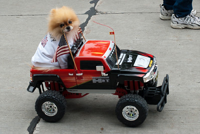 Dog on RC vehicle during Appleton's Flag Day Parade
