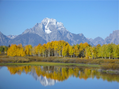 Leave turning gold reflect in the blue water of Oxbow Bend. The mountains of the Grand Tetons stand guard over the scene. And the sky is blue.