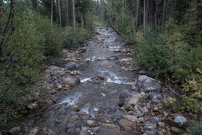 Snake River in the forest in Grand Teton National Park, Wyoming