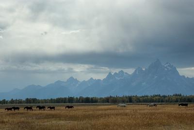 Teton Range and horses grazing the field in Grand Teton National Park, Wyoming