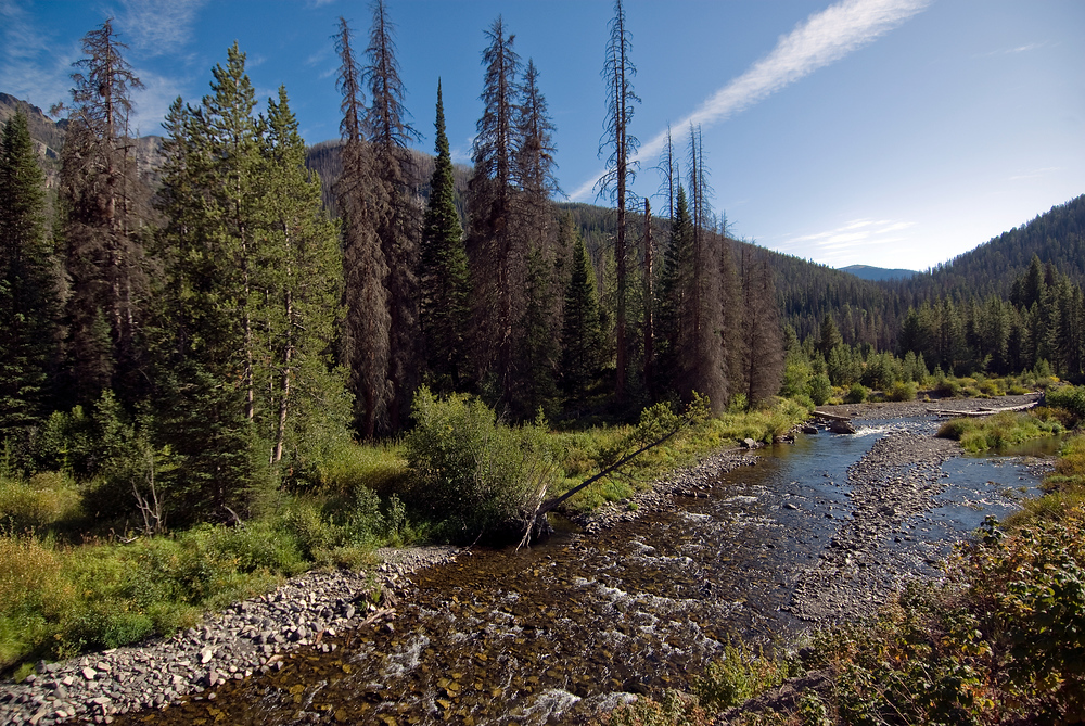 A small stream in Yellowstone National Park, Wyoming