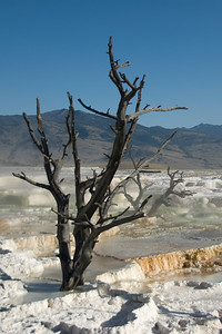 Terraces at Mammoth Hot Springs, Yellowstone National Park