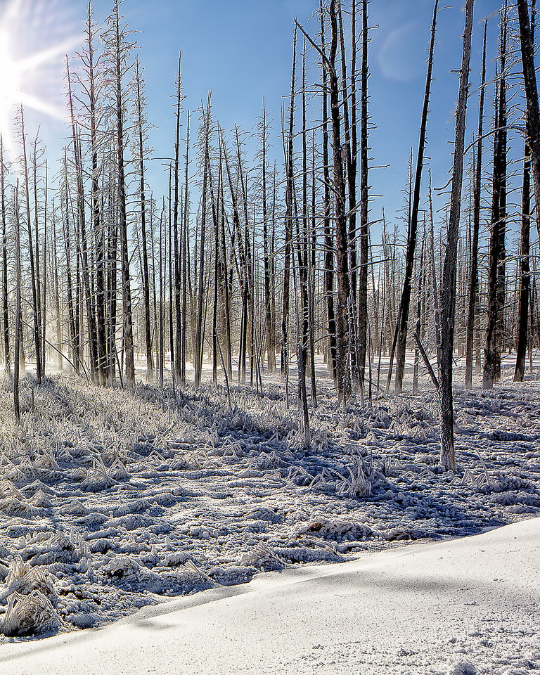 Ghost trees killed by the varying areas inundated by hot water over time