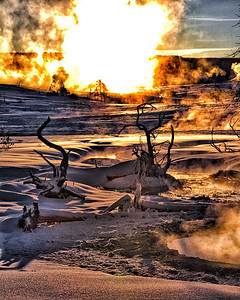 Dead branches and steaming pools back lit by the morning sun