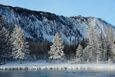 Along the madison river in the early morning sun