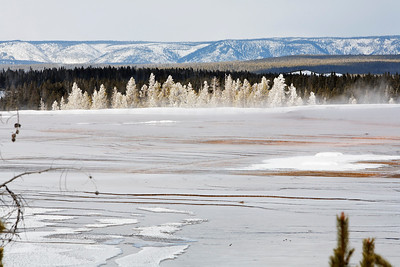 Snow covered trees across the midway geyser basin