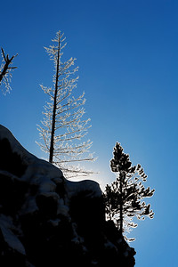 Ghost trees with ice in the sunshine along the firehole river