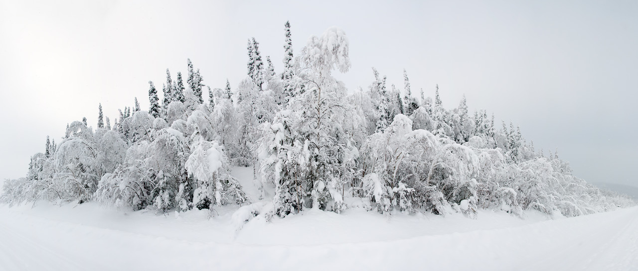 Snow covered trees on the Top of the World Highway outside of Dawson City, Yukon