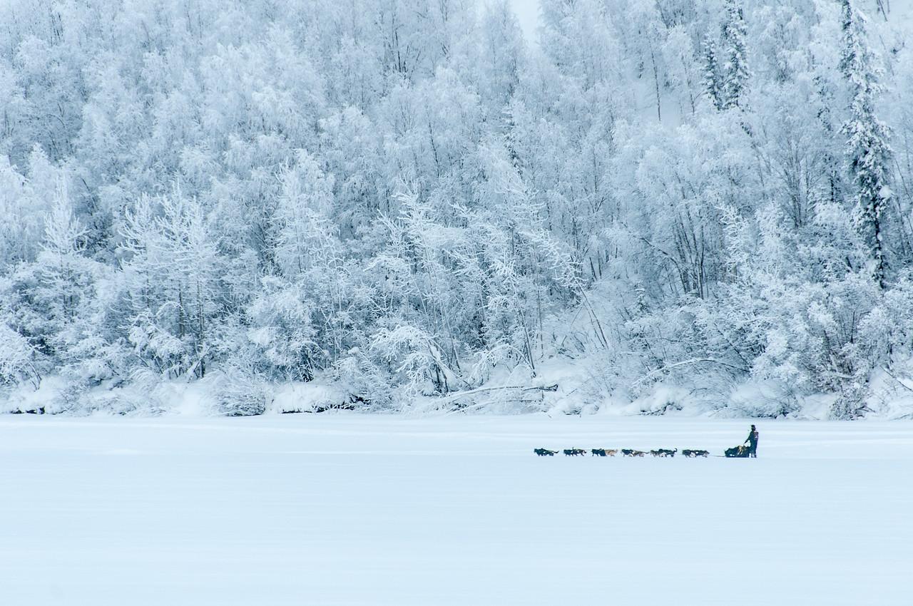 Dogs, Musher and Sled near Dawson City, Yukon, Canada