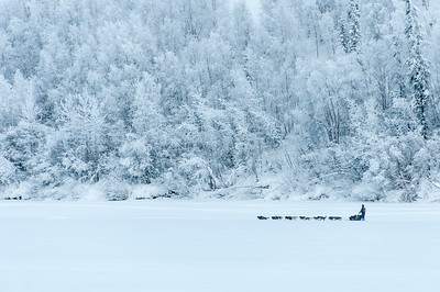 Dogs, Musher and Sled near Dawson City, Yukon, Canada