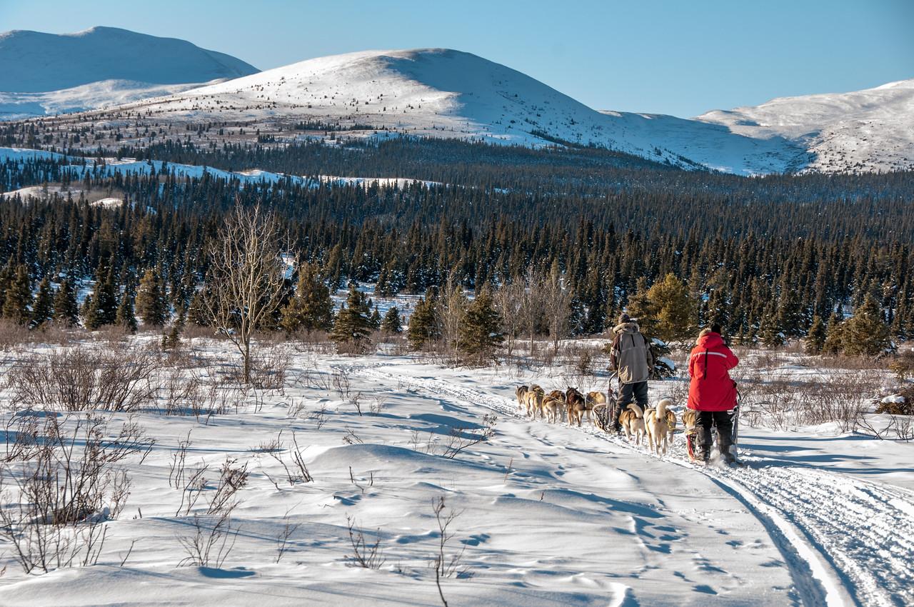 013 Yukon Quest in Whitehorse, Yukon, Canada