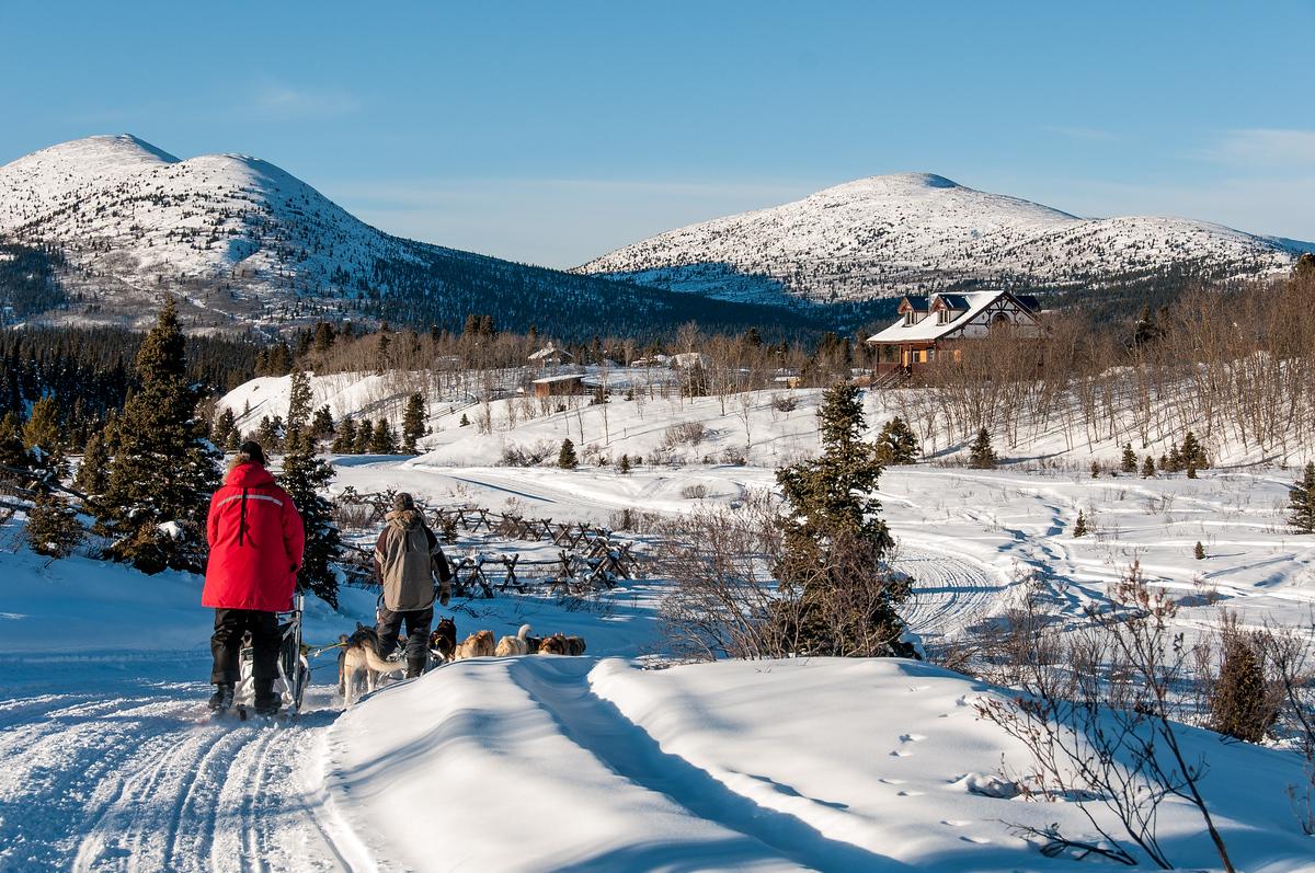 Dog Sledding Outside of Whitehorse, Yukon