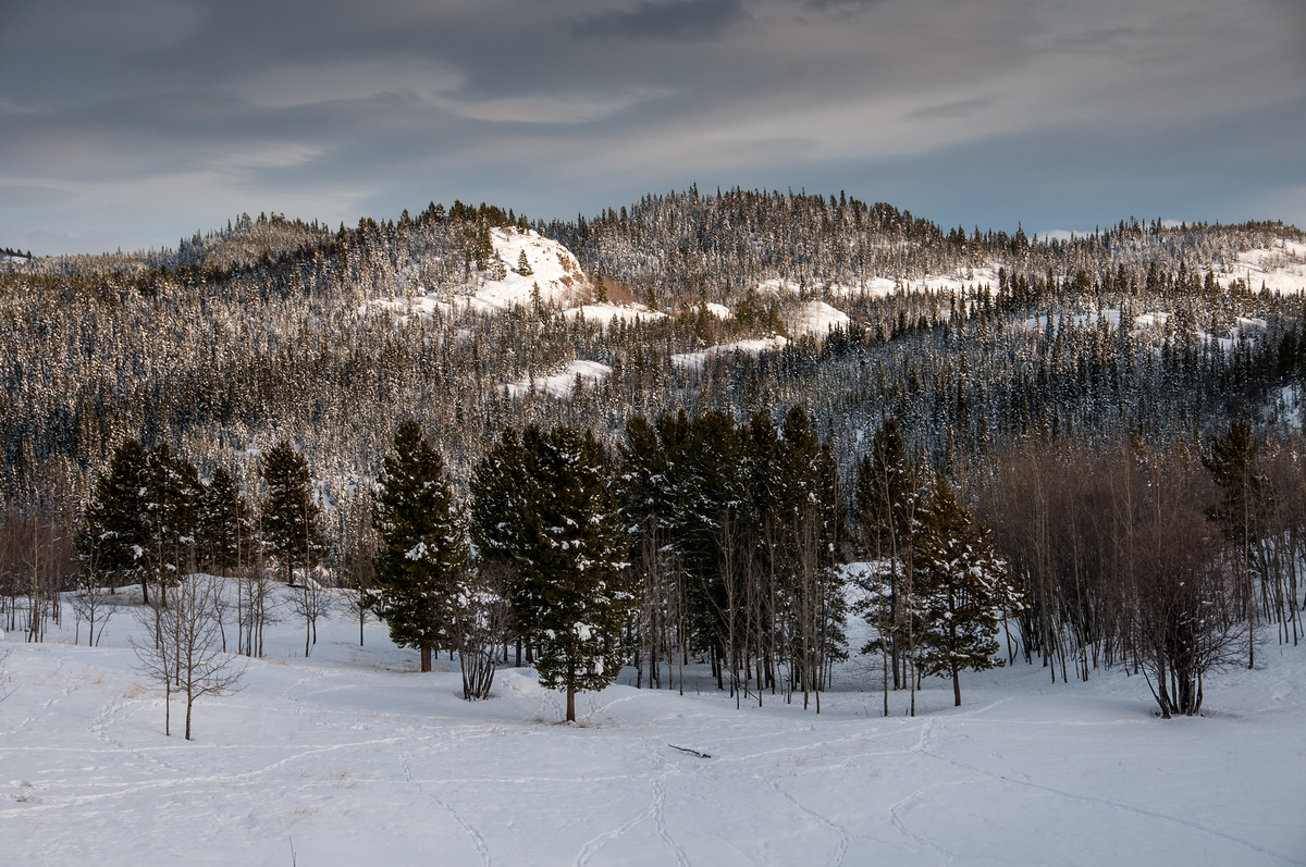 Winter Landscape Outside of Whitehorse, Yukon