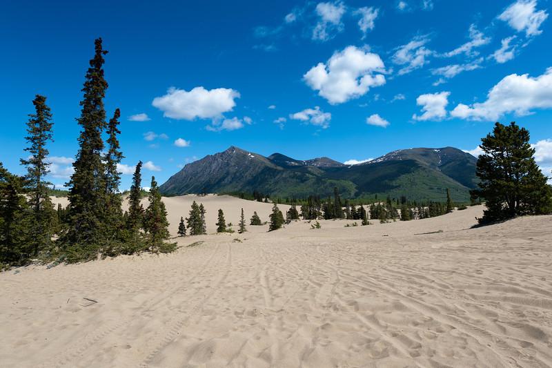 Landscape outside of Whitehorse, Yukon, Canada