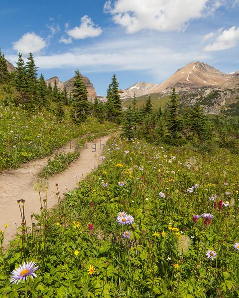 Trail to  Helen Lake