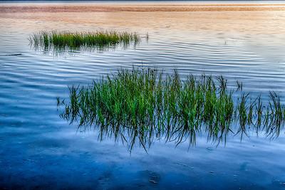 Siletz Grass