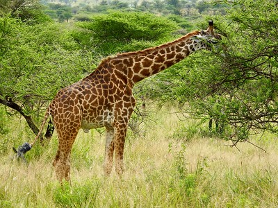 Serengeti Depends on Seaasonal Rain