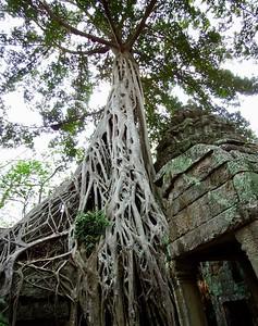 Cambodia: Ta Prohm