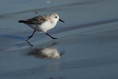 Sanderling Quintana Beach, Freeport, TX