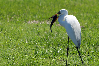 Foraging Birds