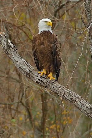 Hawks, Eagles, Vultures and Other Birds of Prey