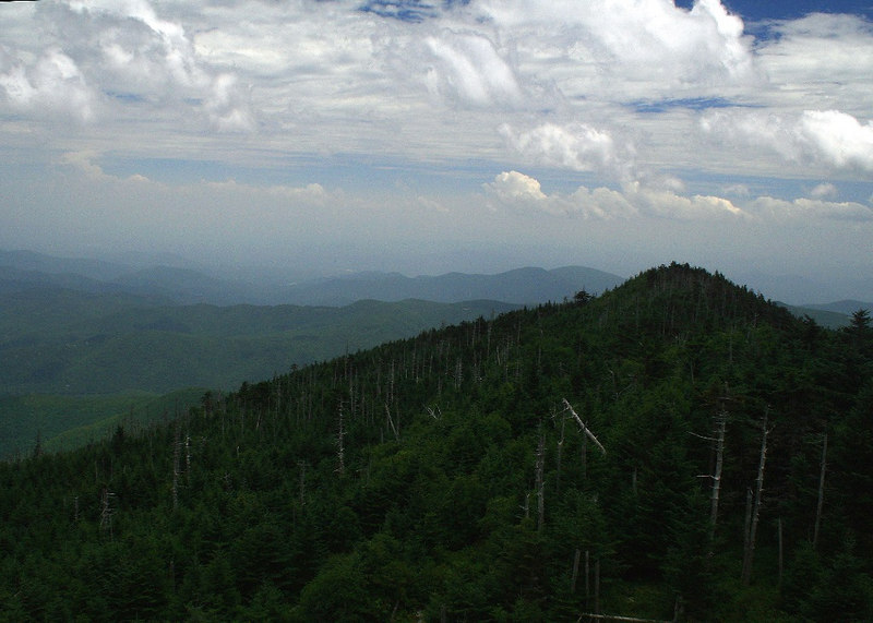 View from Mount Mitchell (6,684 ft).  Notice the dead tree from wooly adelgid infestations; Yancey Co, NC