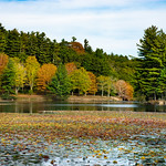 Beautiful autumn scenery. Beautiful lake with floating lily pods in colorful forest.<br />  Blowing Rock, close to Blue Ridge Parkway, North Carolina, US
