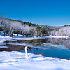 Winter scenery. Beautiful swan  relaxing on the snow by the lake in frosted forest.<br /> Bass Lake, Blowing Rock, close to Blue Ridge Parkway, North Carolina, US