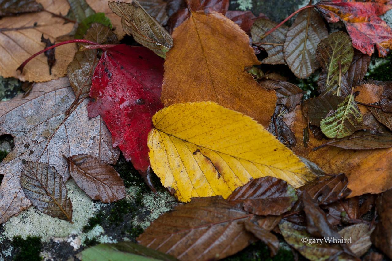Fall Carpet
