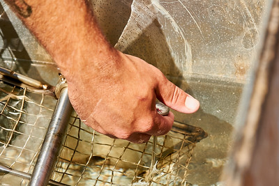 Hayden Smith, co-owner of Gnome Mountain Farms in Franklin, North Carolina, checks the water temperature of the scalder, Sunday, June 27, 2021. After the the chickens' throats are slit, they go into the scalder for approximately 30 seconds to help loosen their feathers before going into the plucker which removes their feathers. The water in the scalder is heated with a propane burner to about 148°.  (Joseph Forzano / Deep Creek Films)
