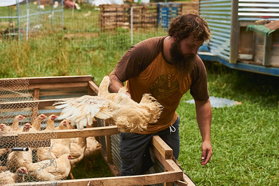 Hayden Smith, co-owner of Gnome Mountain Farms in Franklin, North Carolina, removes two chickens from their pen in preparation for processing, Sunday, June 27, 2021. (Joseph Forzano / Deep Creek Films)