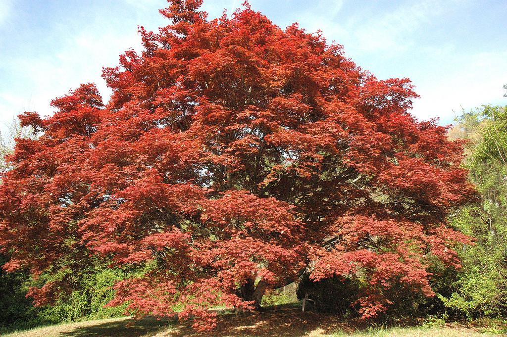 Tree in Murphy, NC - 4/5/07