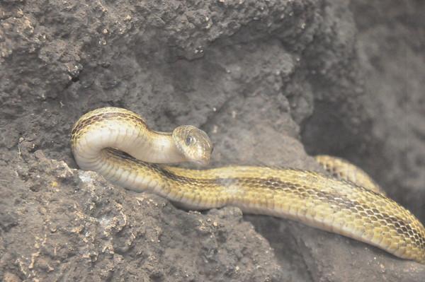 5-27-2011 North Carolina Aquarium