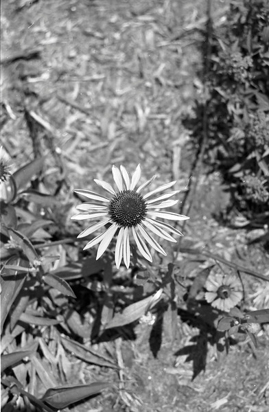 6-7-2012 Hickory Downtown in Black and White