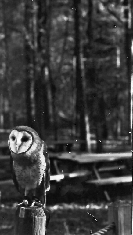 4-3-2011 Carolina Raptor Center in Black and White