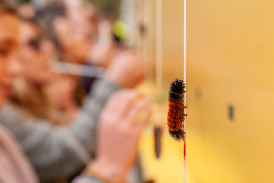 Woolly Worm Festival in {city}, {state}