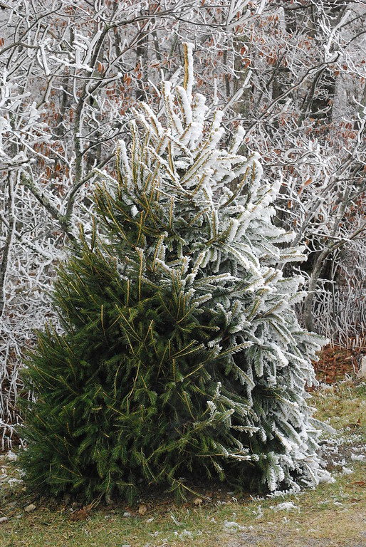 12-4-2009 Beech Mountain in Winter