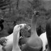 26 Banner Elk Birds